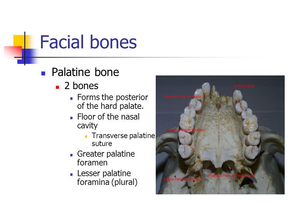 Facial bones Palatine bone 2 bones