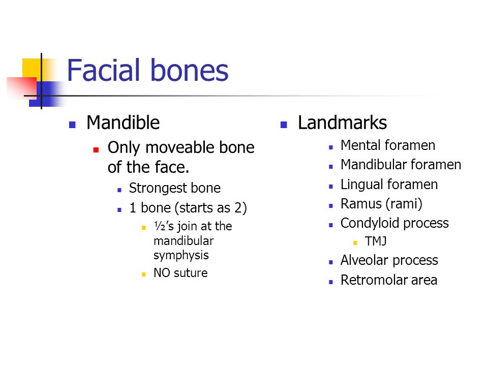 Facial bones Mandible Landmarks Only moveable bone of the face.