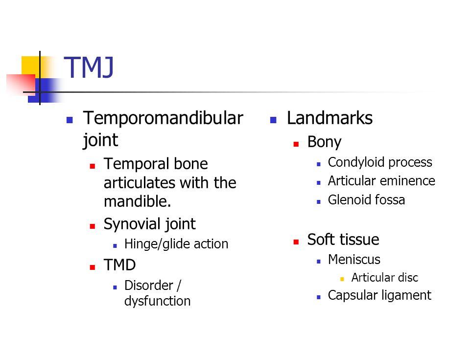 TMJ Temporomandibular joint Landmarks Bony
