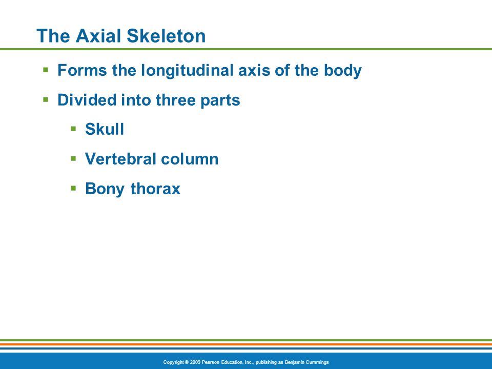 The Axial Skeleton Forms the longitudinal axis of the body