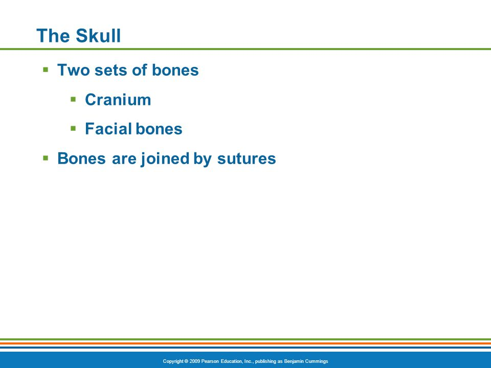 The Skull Two sets of bones Cranium Facial bones