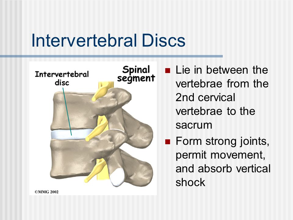 Intervertebral Discs Lie in between the vertebrae from the 2nd cervical vertebrae to the sacrum.