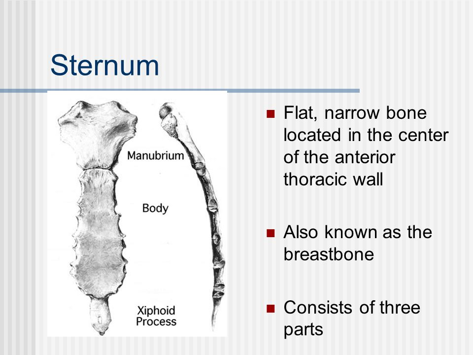Sternum Flat, narrow bone located in the center of the anterior thoracic wall. Also known as the breastbone.
