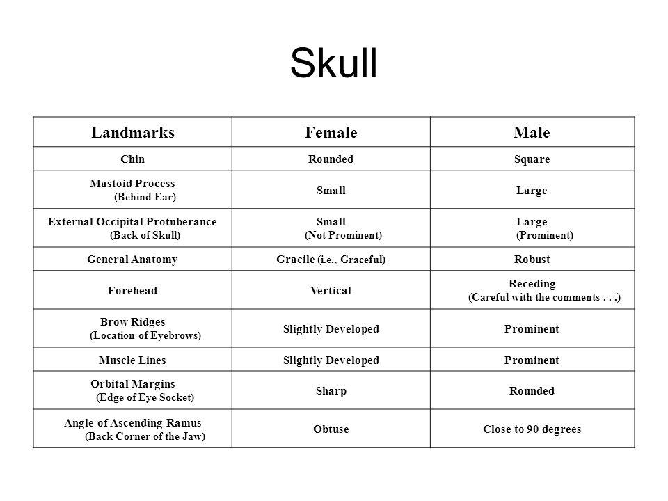 Skull Landmarks Female Male Chin Rounded Square