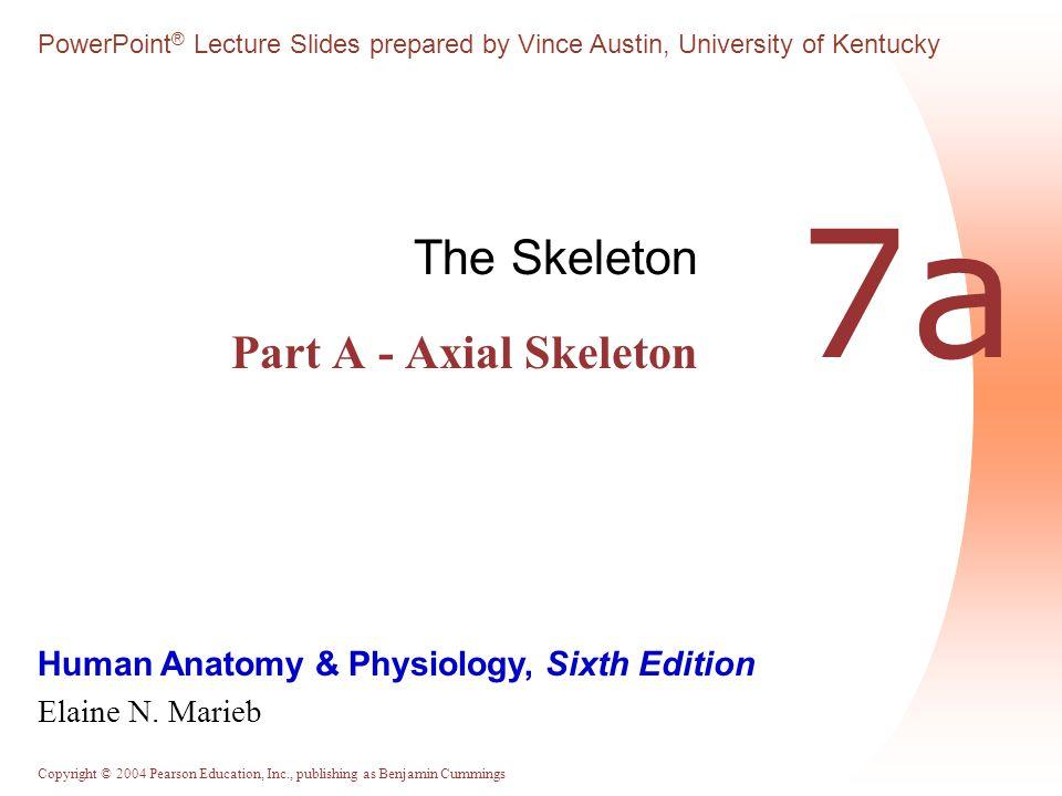 The Skeleton Part A - Axial Skeleton