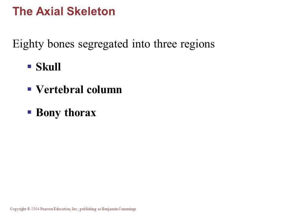 Eighty bones segregated into three regions
