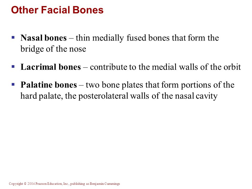 Other Facial Bones Nasal bones – thin medially fused bones that form the bridge of the nose.