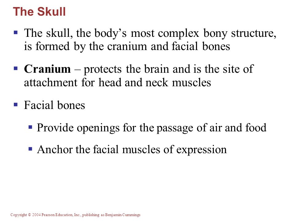 The Skull The skull, the body's most complex bony structure, is formed by the cranium and facial bones.