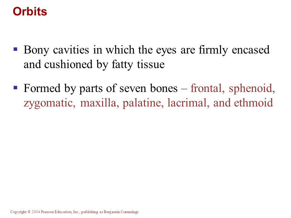 Orbits Bony cavities in which the eyes are firmly encased and cushioned by fatty tissue.
