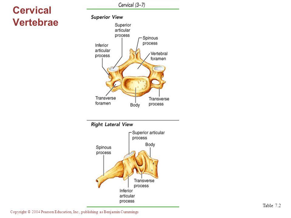 Cervical Vertebrae Table 7.2