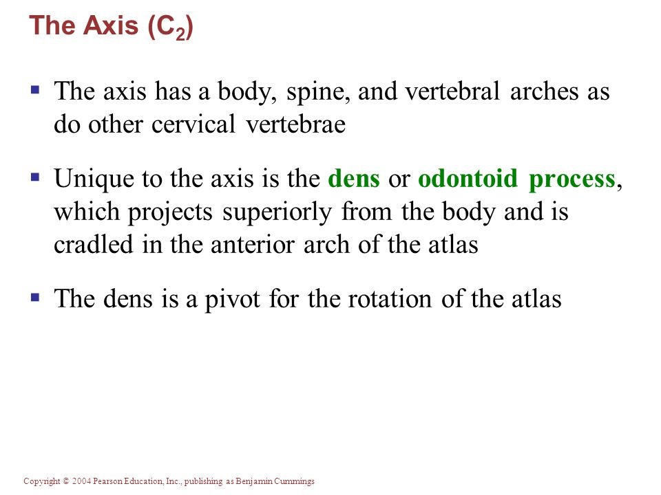 The dens is a pivot for the rotation of the atlas