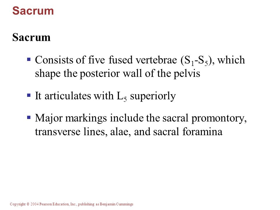 Sacrum Sacrum. Consists of five fused vertebrae (S1-S5), which shape the posterior wall of the pelvis.