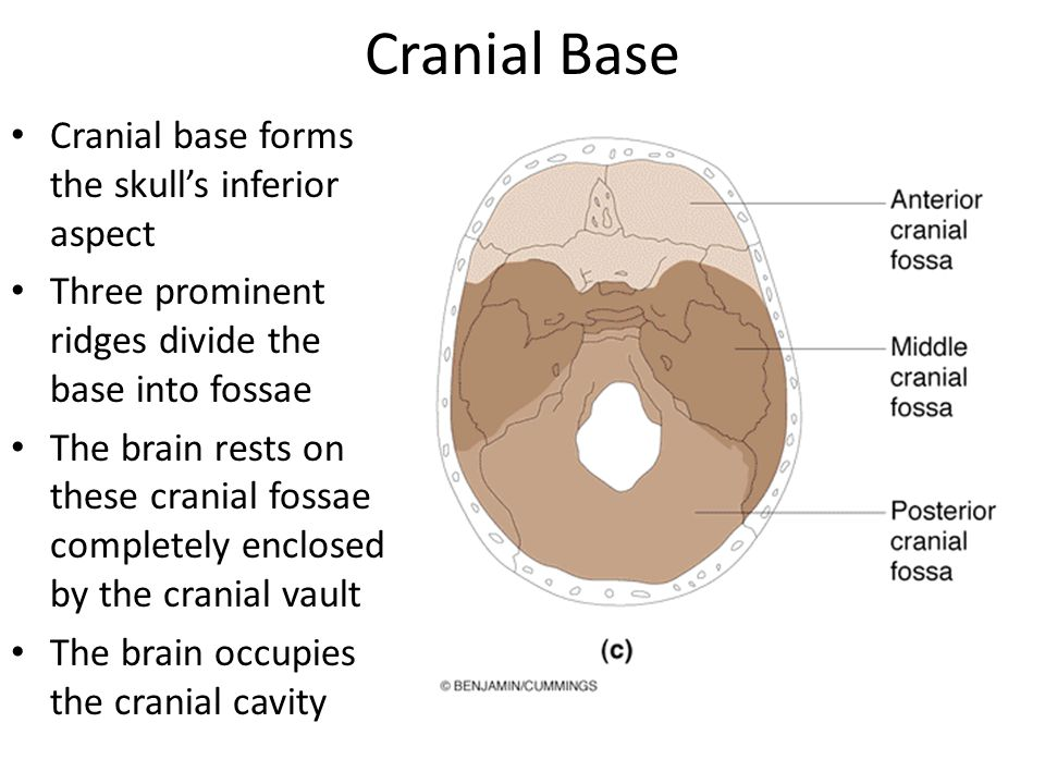 Cranial Base Cranial base forms the skull's inferior aspect