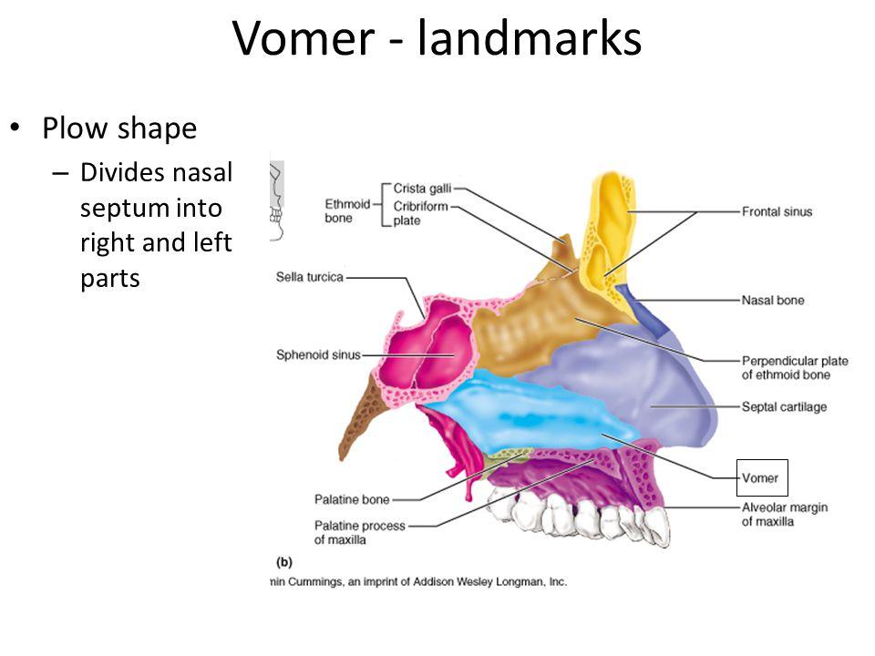 Vomer - landmarks Plow shape