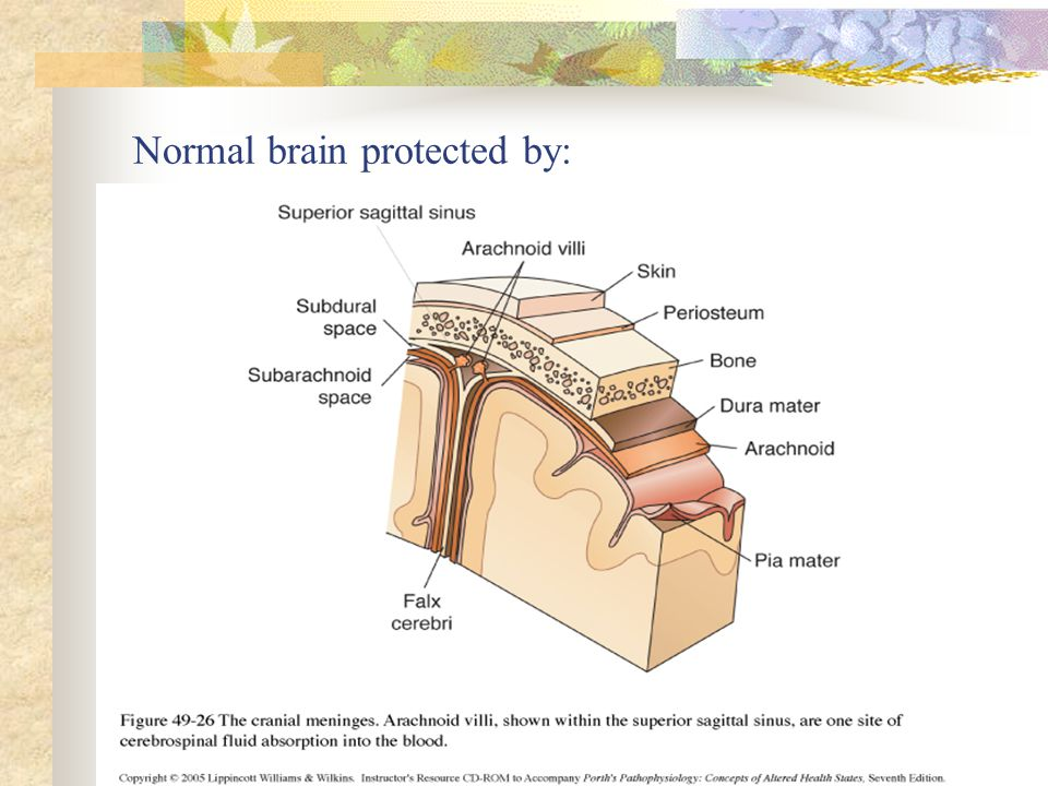 Normal brain protected by: