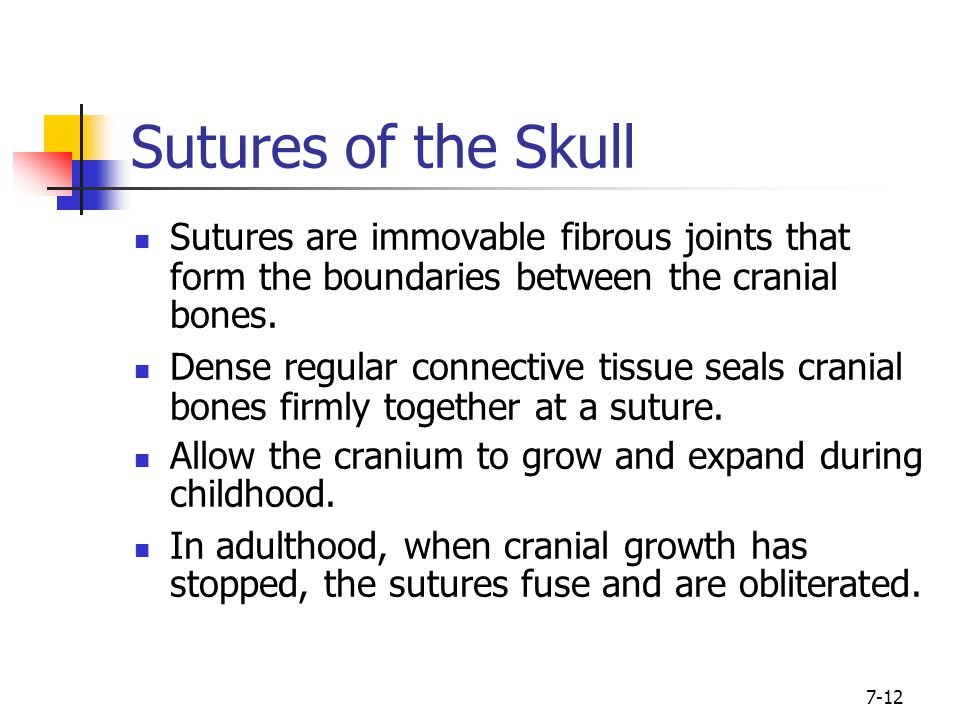 Sutures of the Skull Sutures are immovable fibrous joints that form the boundaries between the cranial bones.