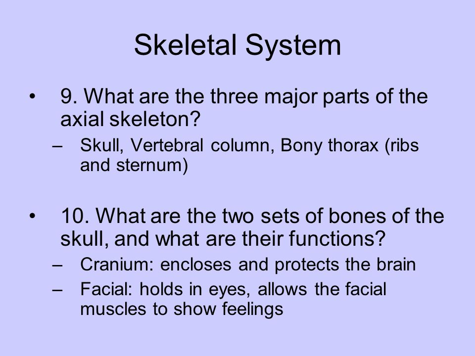 Skeletal System 9. What are the three major parts of the axial skeleton Skull, Vertebral column, Bony thorax (ribs and sternum)