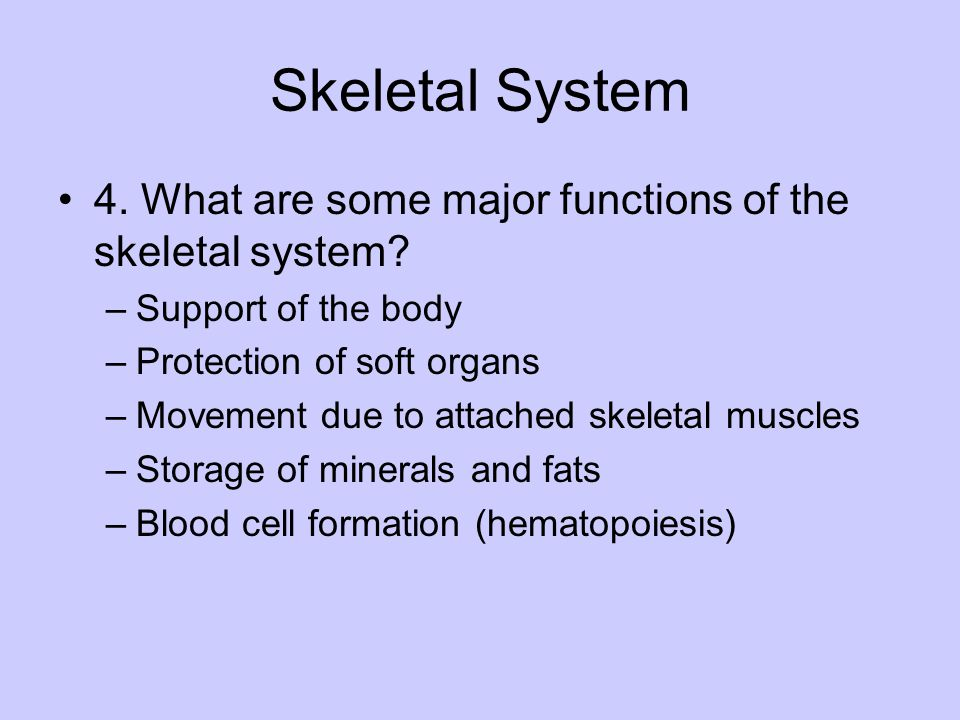 Skeletal System 4. What are some major functions of the skeletal system Support of the body. Protection of soft organs.