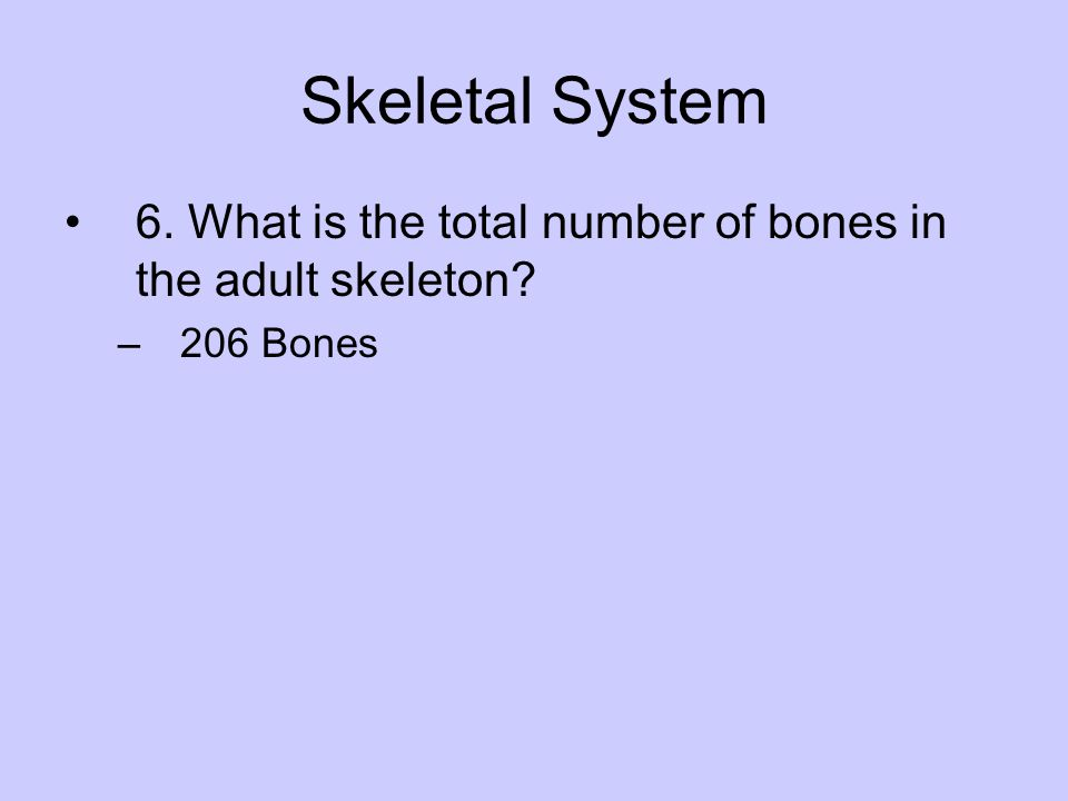 Skeletal System 6. What is the total number of bones in the adult skeleton 206 Bones