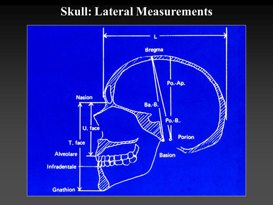 Skull: Lateral Measurements