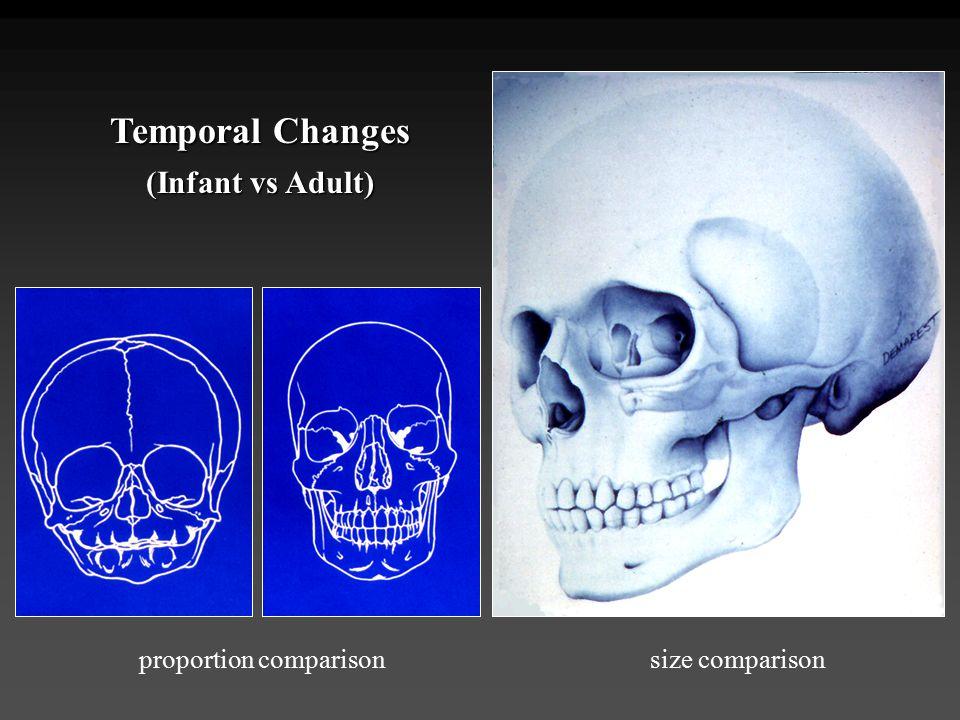 Temporal Changes (Infant vs Adult) proportion comparison
