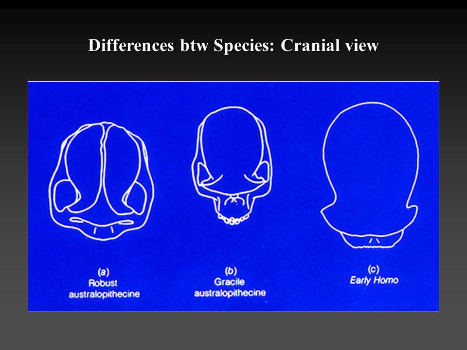 Differences btw Species: Cranial view