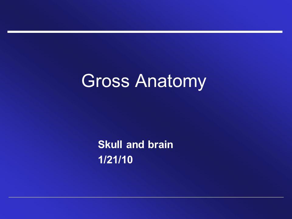 Gross Anatomy Skull and brain 1/21/10