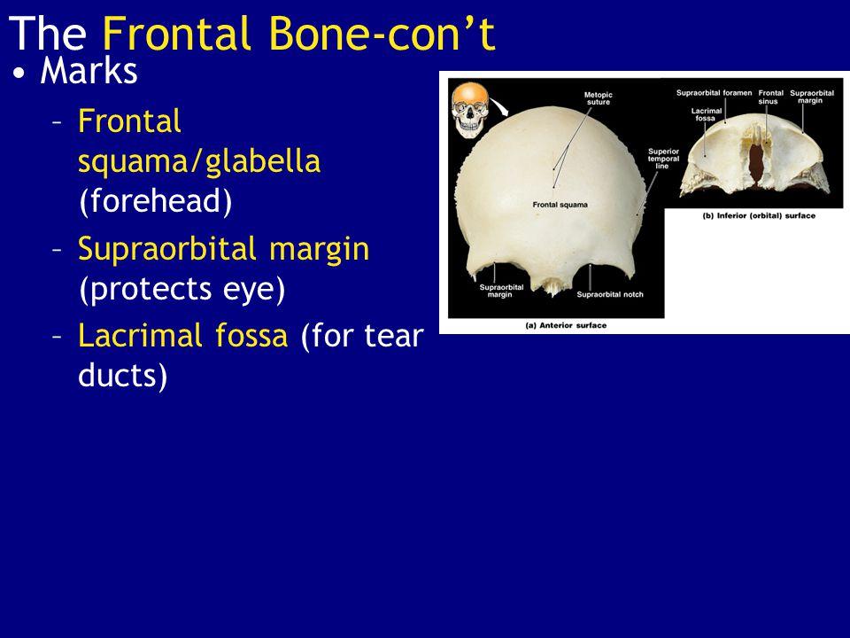 The Frontal Bone-con't
