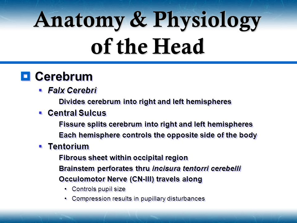 Anatomy & Physiology of the Head