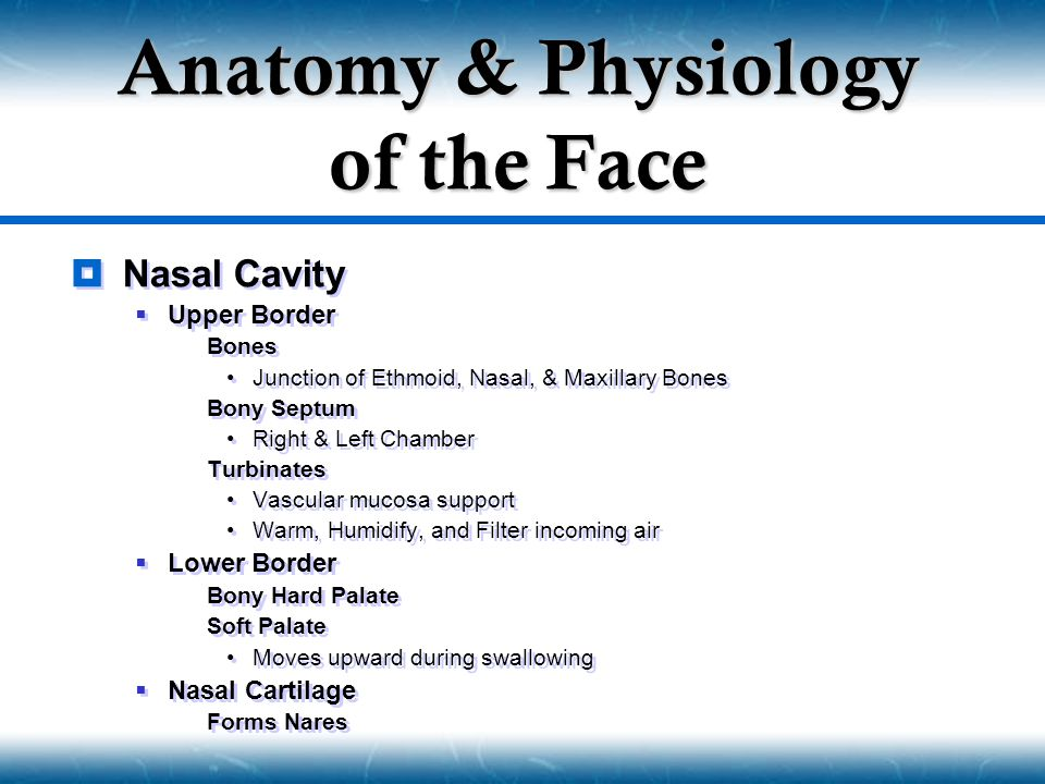 Anatomy & Physiology of the Face