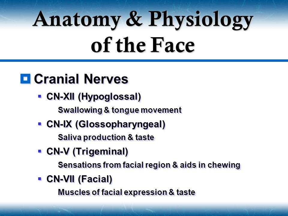anatomy and physiology of the face Quizlet provides anatomy and physiology anatomy physiology neck face head activities, flashcards and games start learning today for free.