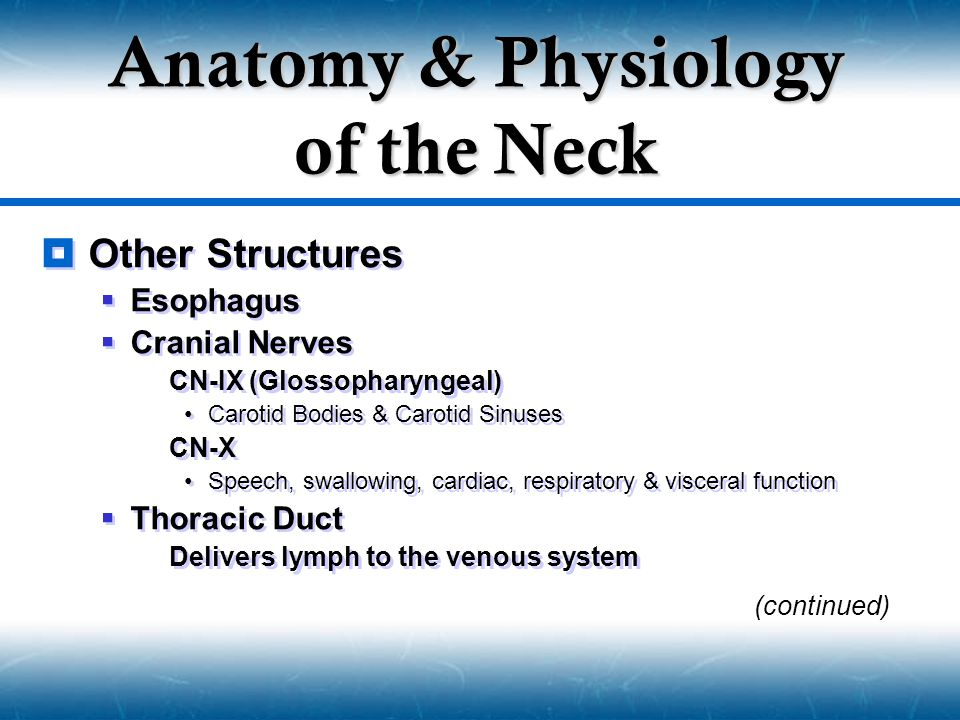 Anatomy & Physiology of the Neck