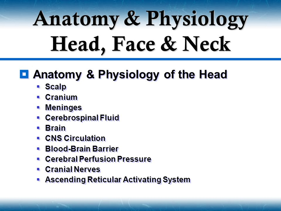 Anatomy & Physiology Head, Face & Neck