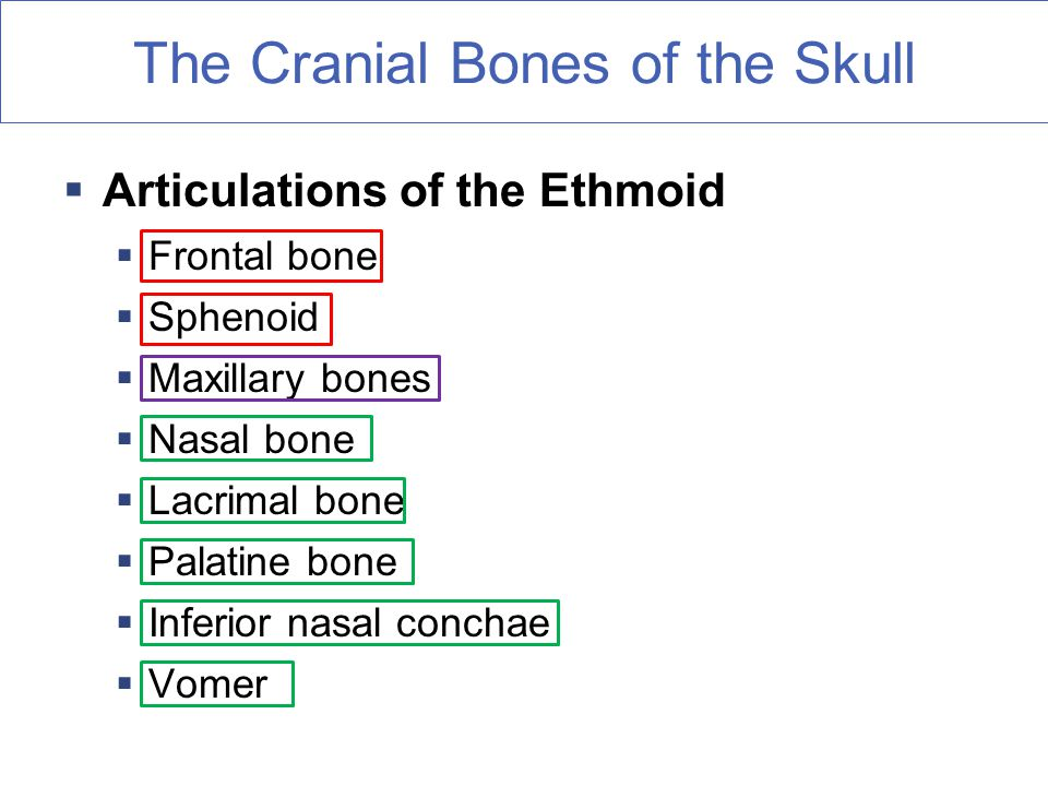 the axial skeleton fun facts about bones - ppt download, Human Body