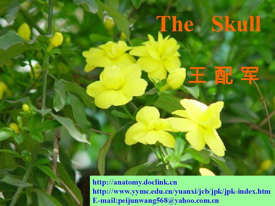 The Skull 王 配 军 http://anatomy.doclink.cn