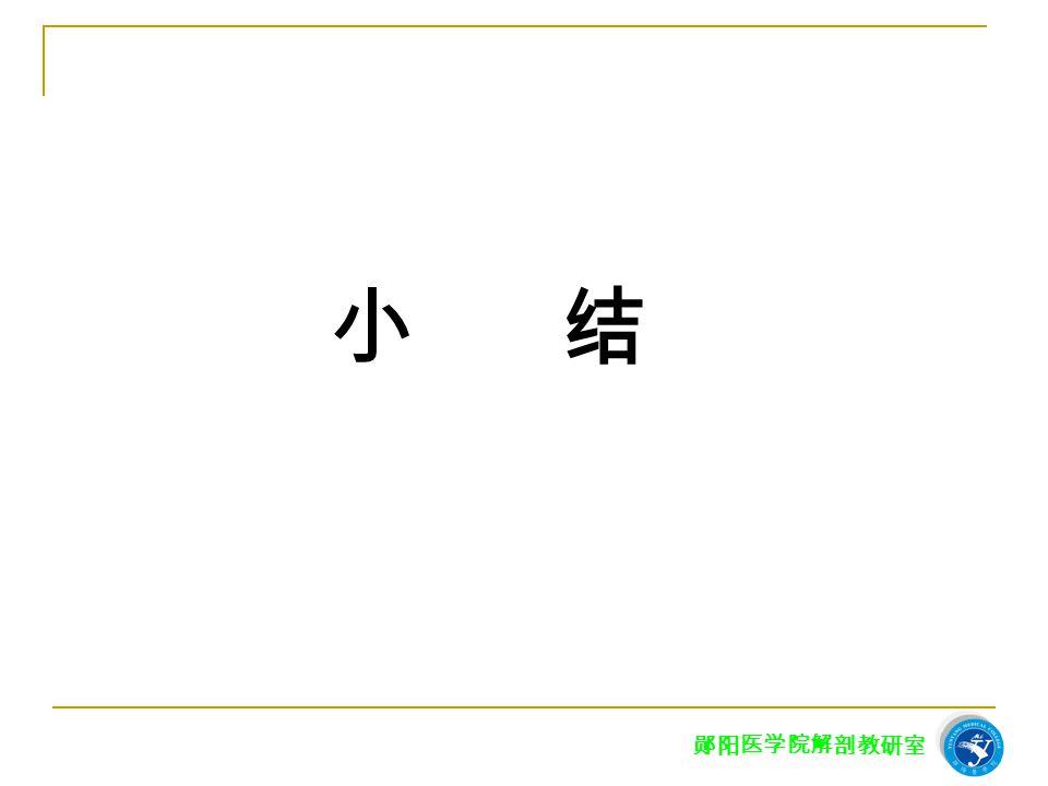 小 结 郧阳医学院解剖教研室