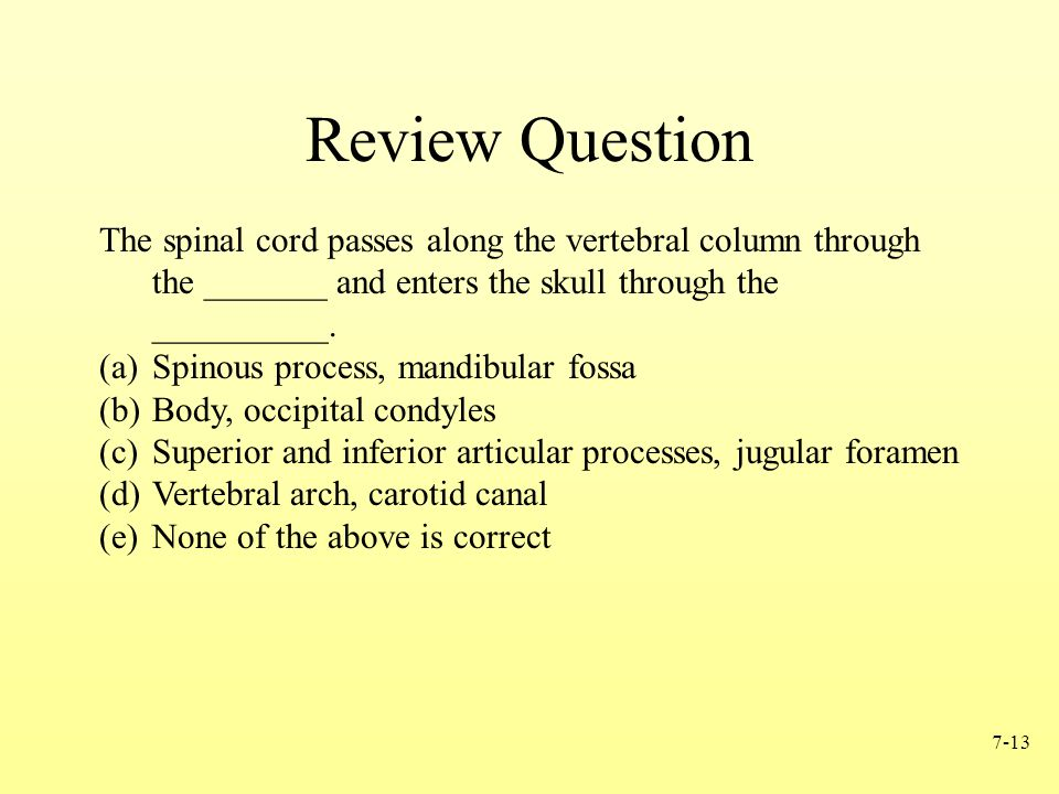 Review Question The spinal cord passes along the vertebral column through the _______ and enters the skull through the __________.