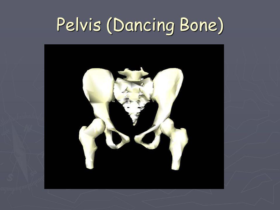 Pelvis (Dancing Bone)