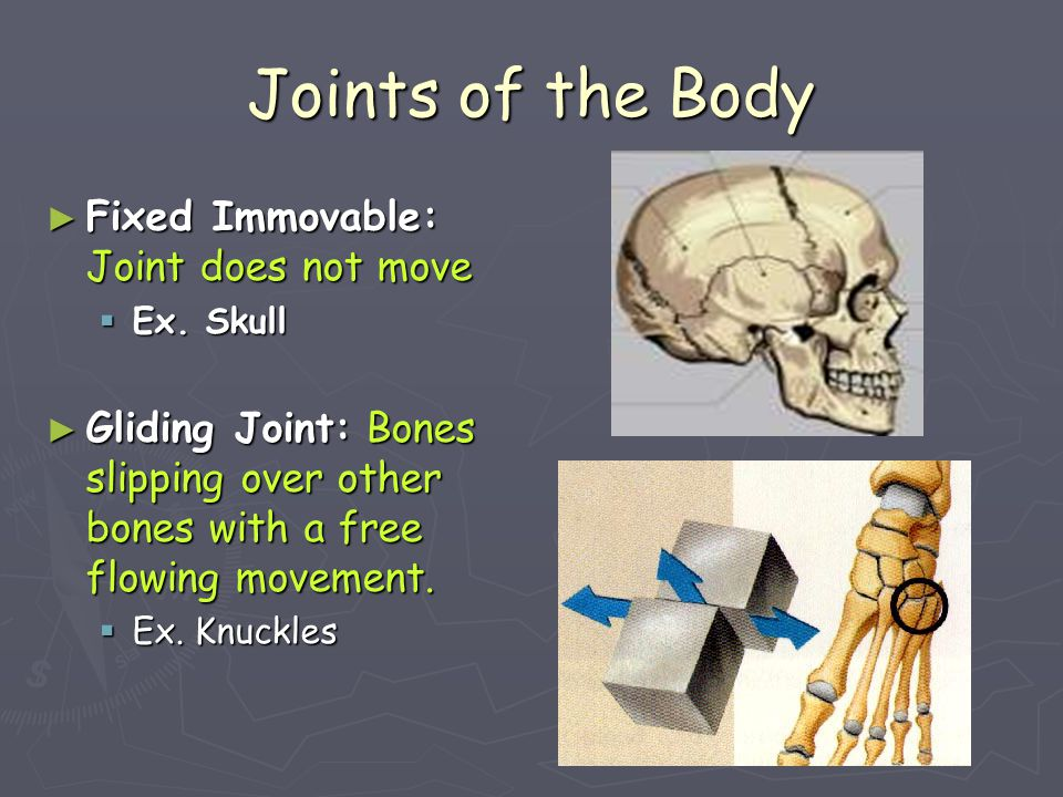 Joints of the Body Fixed Immovable: Joint does not move
