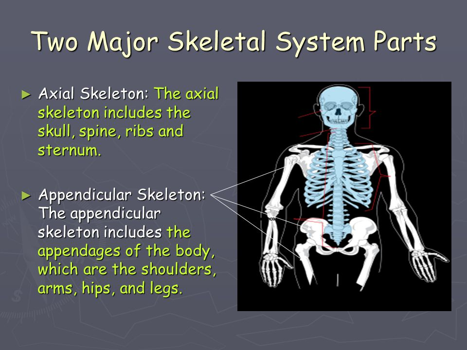 Two Major Skeletal System Parts