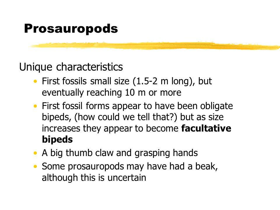Prosauropods Unique characteristics