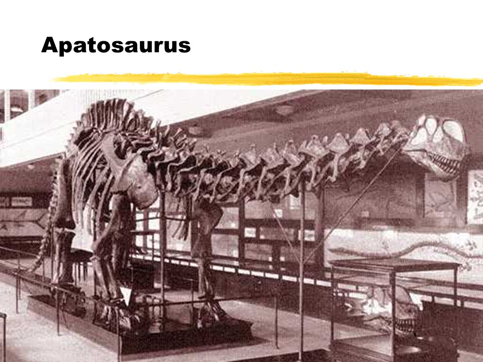 Apatosaurus Apatosaurus