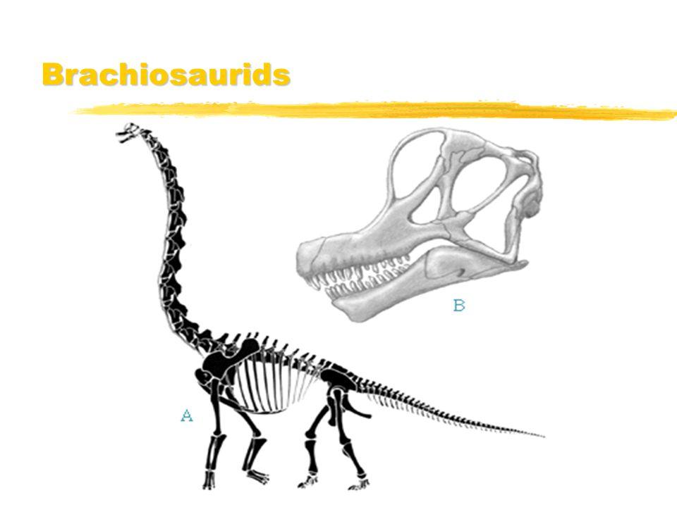 Brachiosaurids