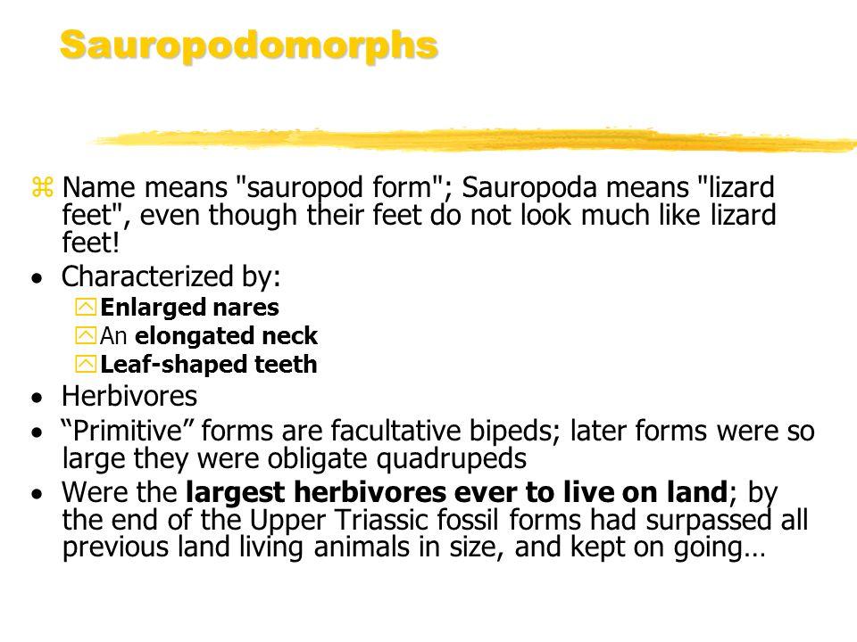 Sauropodomorphs Name means sauropod form ; Sauropoda means lizard feet , even though their feet do not look much like lizard feet!