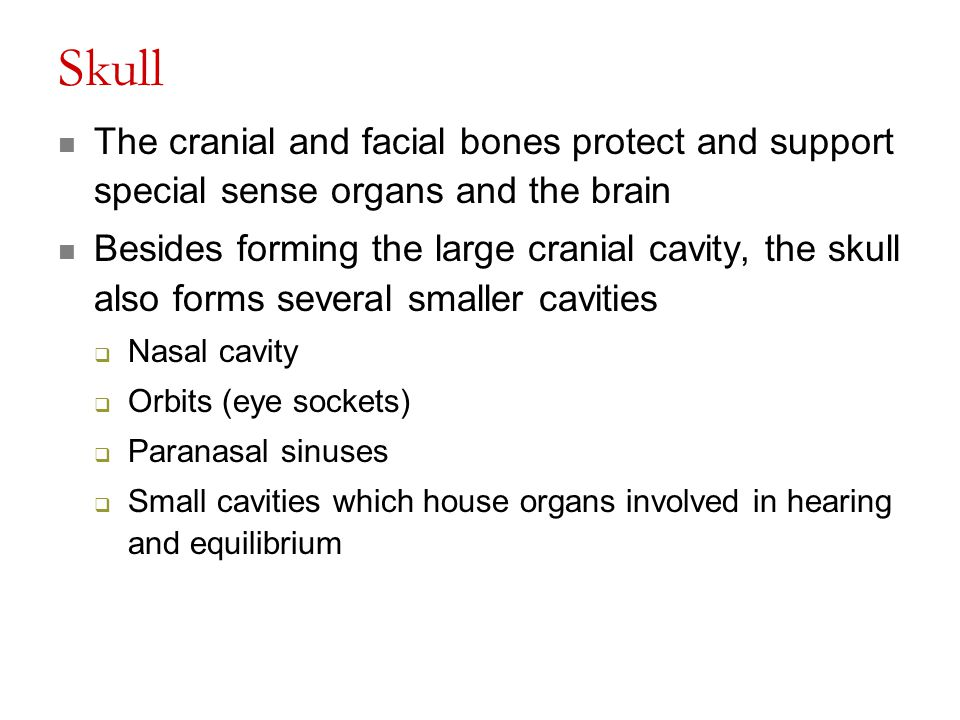 Skull The cranial and facial bones protect and support special sense organs and the brain.