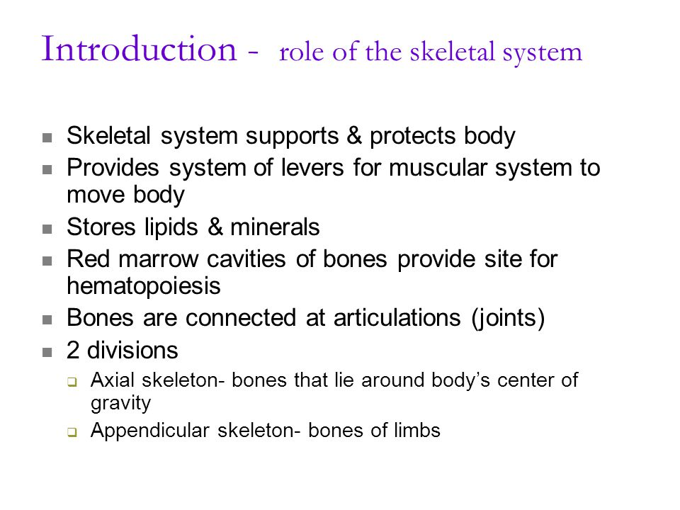 Introduction - role of the skeletal system