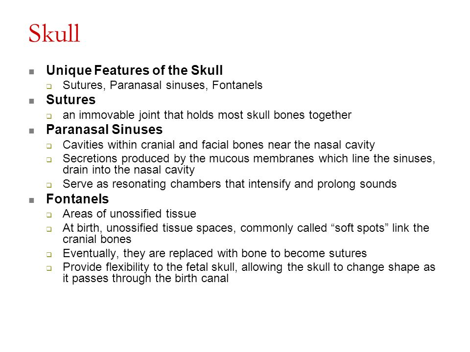 Skull Unique Features of the Skull Sutures Paranasal Sinuses Fontanels
