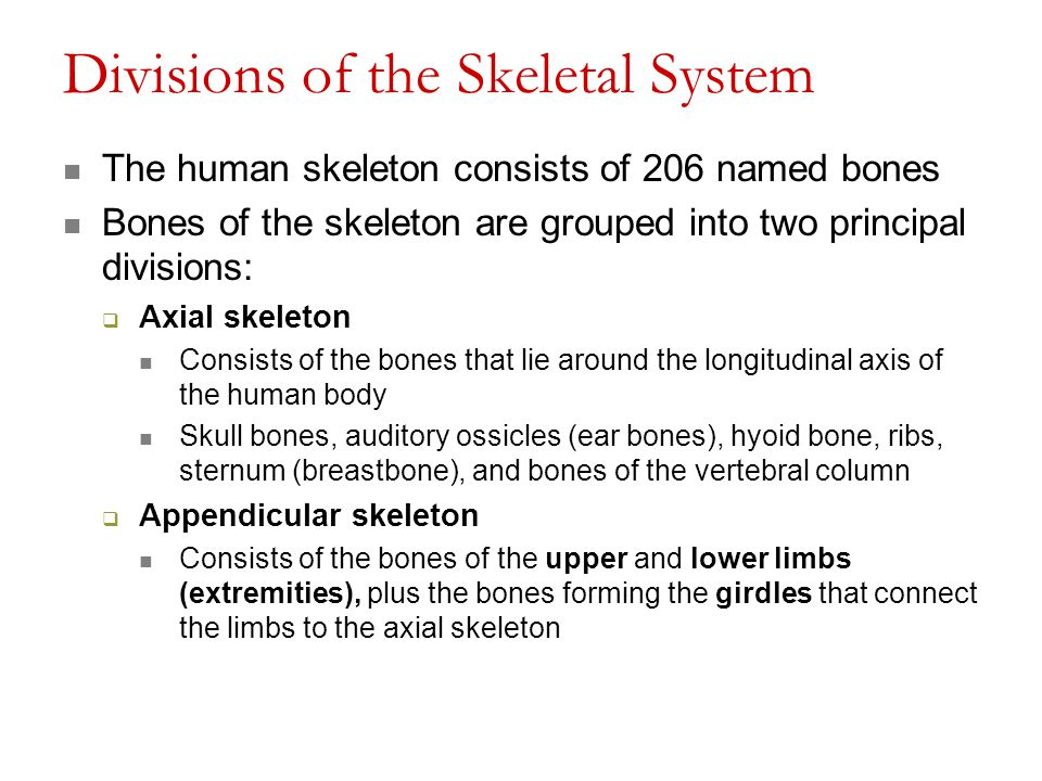 Divisions of the Skeletal System
