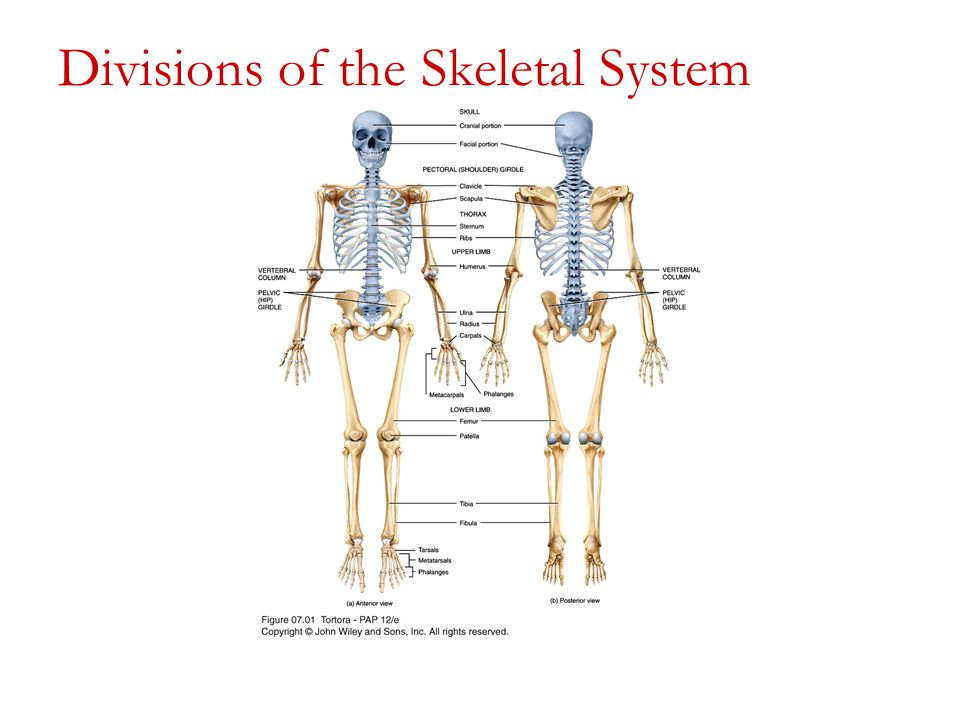 New study finds one Skeletal system exercise