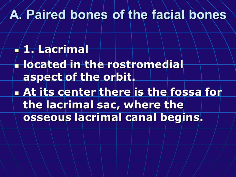 A. Paired bones of the facial bones